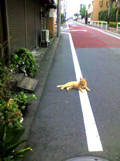 行く手を阻むネコ