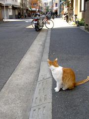 ネコも歩道
