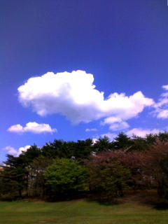 sky - fish