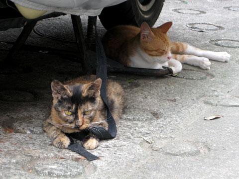 summer, cats, digital camera